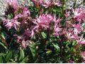 Pokojové kvetoucí rostliny